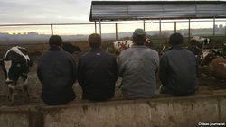 15 тысяч трудовых мигрантов из Ферганской долины возвращены домой