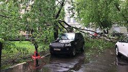 Ураган в Москве забрал жизни 11 людей