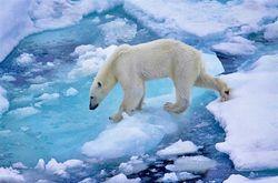 Климат Арктики меняется быстрее, чем в других местах на Земле