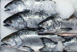 В Крыму рыбакам не разрешают выходить в море на промысел