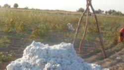 В Узбекистане на хлопковом поле скончался главврач больницы
