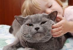 Ученые развеяли миф: Кошки не любят, когда их гладят, у них от этого стресс