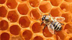 Ученые объяснили, почему мед может храниться практически вечно