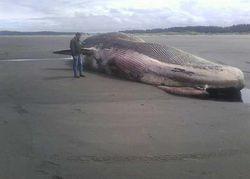 Ученые в тревоге: смертельный вирус, убивший 800 дельфинов, взялся за китов