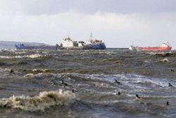Азовское море может остаться без рыбы - причины