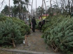 Гульнара Каримова рассказала о причинах запрете новогодних елок в Узбекистане