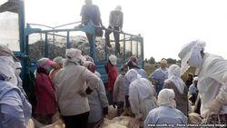 Хронология: 13 жертв хлопкового фронта в Узбекистане