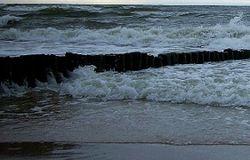 Из-за химического оружия рыба в Балтийском море подвержена мутации