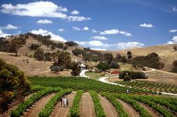 Инвесторам: вина Австралии произвели фурор на выставке в Лондоне