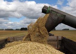 Через 10 лет Украина станет 2-м, а Россия – 3-м экспортером зерновых в мире