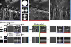 """Немецкие нейробиологи нашли """"видеокодек"""" в мозгу человека"""