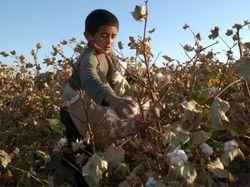 В Узбекистане на учителя, выступившего против применения детского труда, оказывают давление
