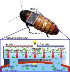 Ученые планируют создать беспроводную сеть из тараканов