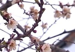Назван ущерб украинским аграриям от весенних заморозков