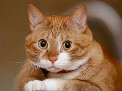 В России будут награждать котов за героические поступки