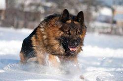 Под Киевом собаки насмерть загрызли ветерана АТО