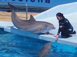 Прототип переводчика с языка дельфинов на человеческий разработан в США