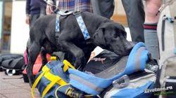 В российских тюрьмах собак научили искать запрещенные мобилки