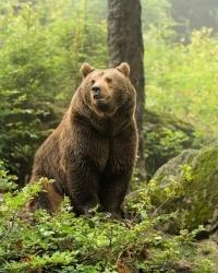 Пока женщина рожала в глухой тайге Якутии, полицейские отгоняли медведей