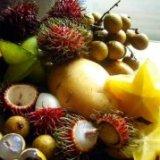 Чем полезны экзотические фрукты – врачи