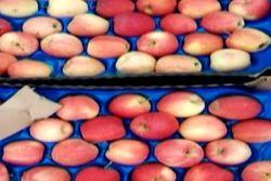 Беларусь прекратит поставку в Россию санкционных продуктов