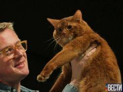 Инвестиции: в Киеве выбирали самого большого и дорогого кота