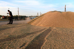 Премьер Украины Азаров анонсировал создание зернового пула с Россией и Казахстаном