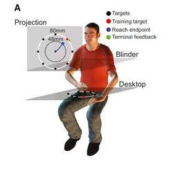 Работа за компьютером улучшает ориентацию в пространстве – ученые