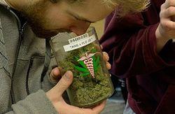 За день продавцы марихуаны в Колорадо обогатились на миллион долларов
