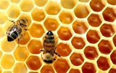 Убийце двух миллионов пчел дали четыре месяца условно
