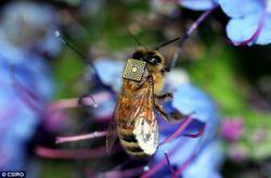 В Австралии пять тысяч пчел превратили в киборгов