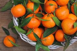 Российские ученые хотят выращивать мандарины и лимоны в Краснодарском крае