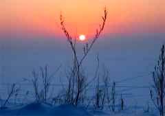 В новогоднюю ночь в казахстанской степи замерзла семья