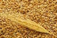 Украина хочет ввести новую пошлину на экспорт зерна?