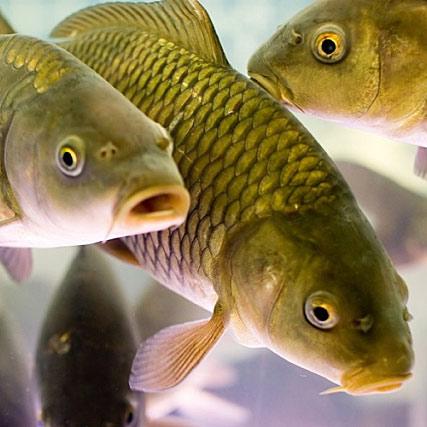 Охрана рыб.