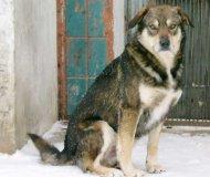 В Ивано-Франковской области дворовой пёс спас жизнь девушки