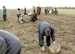 Каковы итоги работы кыргызских сельхозпроизводителей?