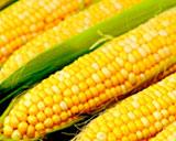 Повлияет ли засуха в Китае на цену кукурузы