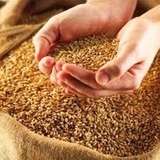 Цена на пшеницу