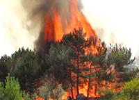 Литва решает оказывать России помощь в тушении пожаров или нет?