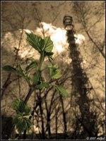 Чернобыльская флора полностью адаптировалась к радиации