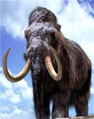 Через 4 года на Земле могут снова появиться мамонты
