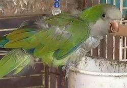 В США попугай помог раскрыть преступление и поймать грабителей