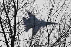В перехватах самолетов НАТО российской авиацией виноват сам альянс – Грушко