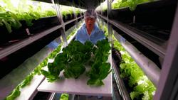 Китай готов завалить Россию своей сельхозпродукцией