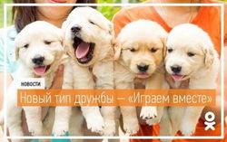 В «Одноклассниках» добавлен новый тип дружбы