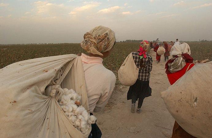Фото как собирают хлопок