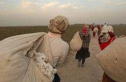 На уборке хлопка в Узбекистане новая жертва - 21-летняя девушка