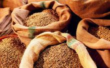 В Украине дефицит на рынке продовольственной пшеницы - последствия