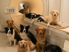 Ученые пытаются доказать возможность собак говорить
